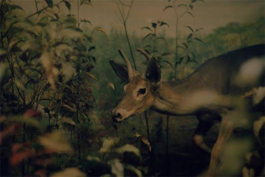 Human Nature Series by Debbie Carlos