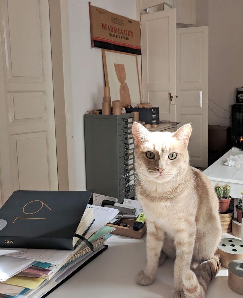 ginger cat sidoro